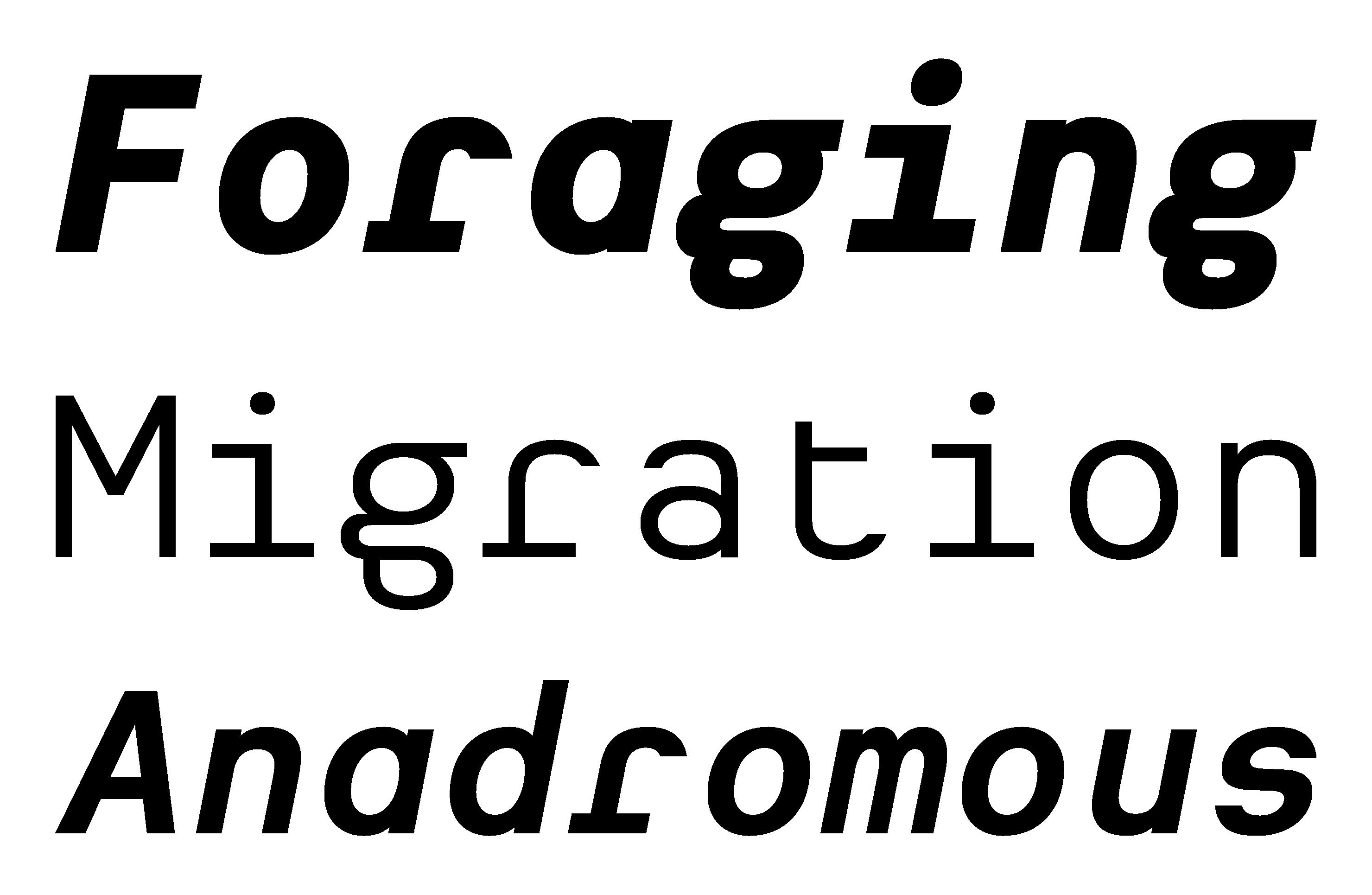 Typeface Heimat Mono A02 Atlas Font Foundry